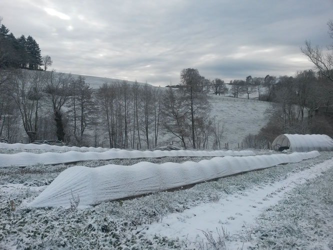11/02/2016 - L'hiver est bien là.