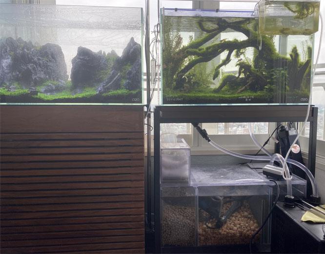 水草水槽 マメオーバーフロー