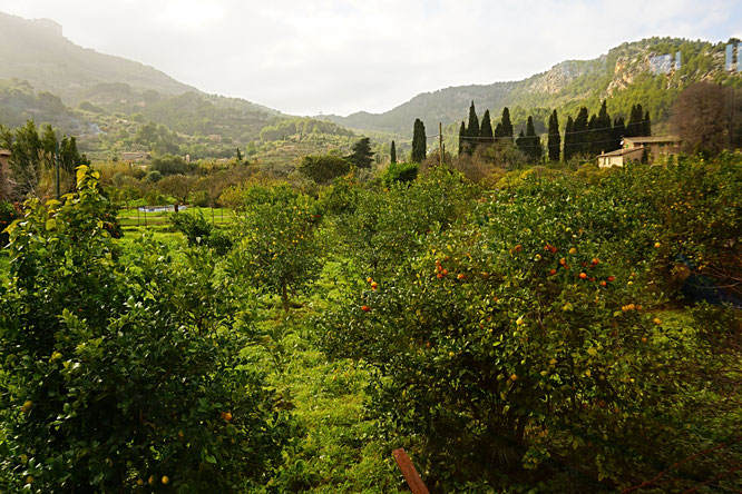 die Landschaft zwischen Sóller und Port de Sóller