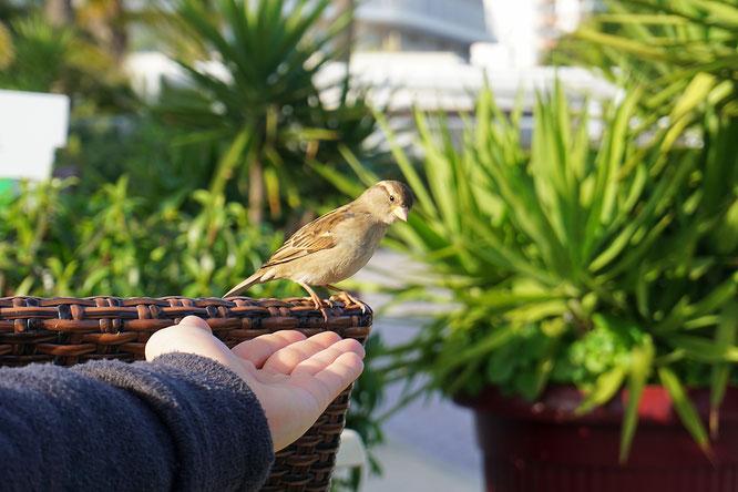 magalaf, bird, vogel, mallorca