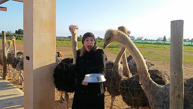 Straußenfarm Artestruz, avestruz, Strauß, ostrich, Mallorca, Campos