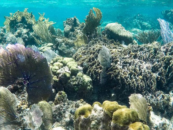 belize-barrier-reef-camesawtravelled-reiseblog-fakten