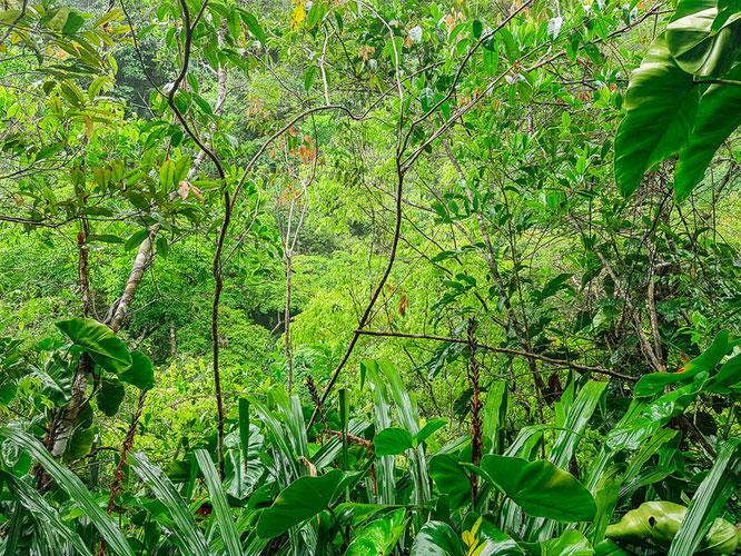 cockscomb-national-park-reserve-jaguar-reservat-fakten-belize-reiseblog-camesawtravelled
