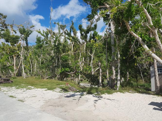Der Dschungel gleich hinterm Strand, Trunk Bay, St. John