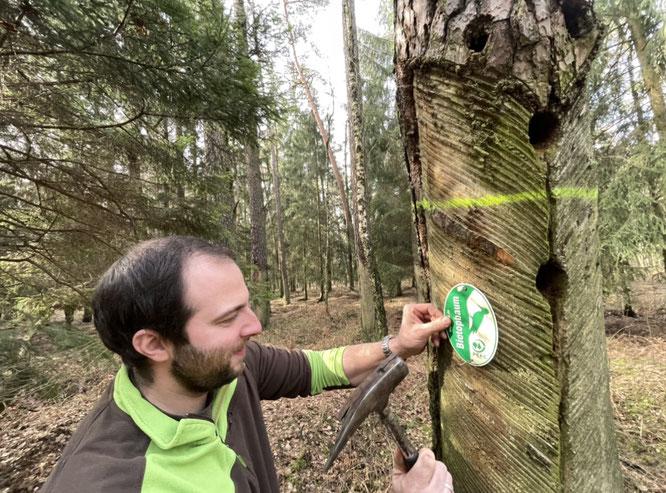 Anbringen des PEFC-Siegels im landkreiseigenen Wald  © Landratsamt Görlitz