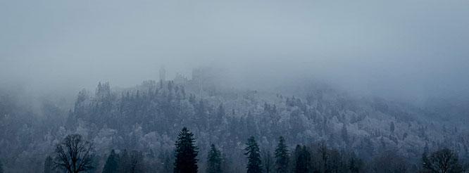 Wald Nebel Wanderung