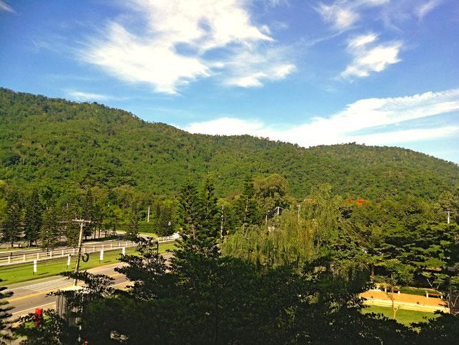 Grüner Wald im Khao Yai Nationalpark in Thailand
