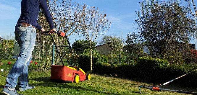 Tipps Rasenpflege