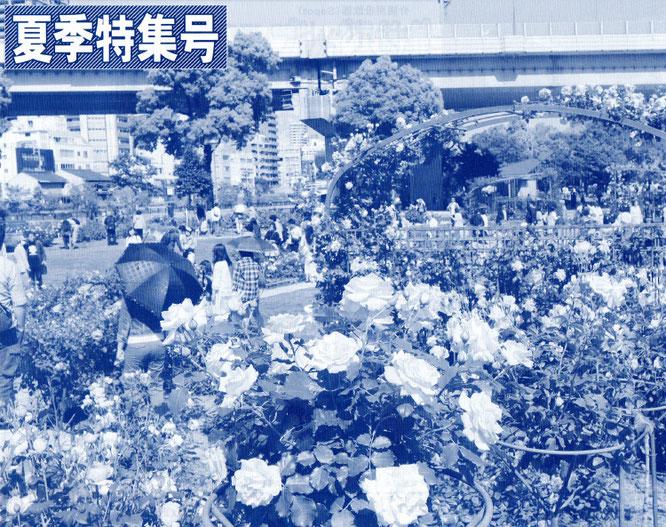 大阪市の中之島公園バラ園 約310種・3700株のバラが咲く