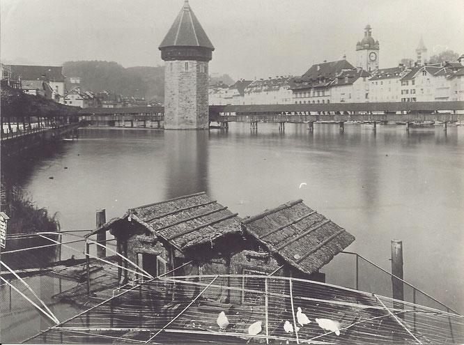 Schwanengehege 1884 (Archiv der OGL)