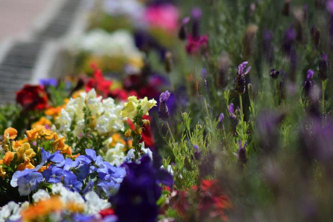 Giardino cagliari, idee giardino, consigli giardino, impianto irrigazione, fiori, consigli fiori, estate