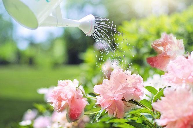 Giardinaggio, verde cagliari, impianto irrigazione cagliari, giardino cagliari, consigli giardino, idee giardino