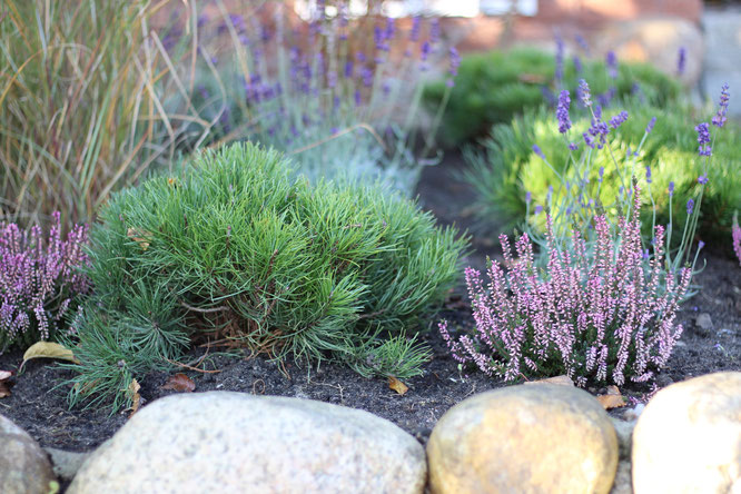 Friesenwall Bepflanzen der friesenwall neu gestaltet alsterleben
