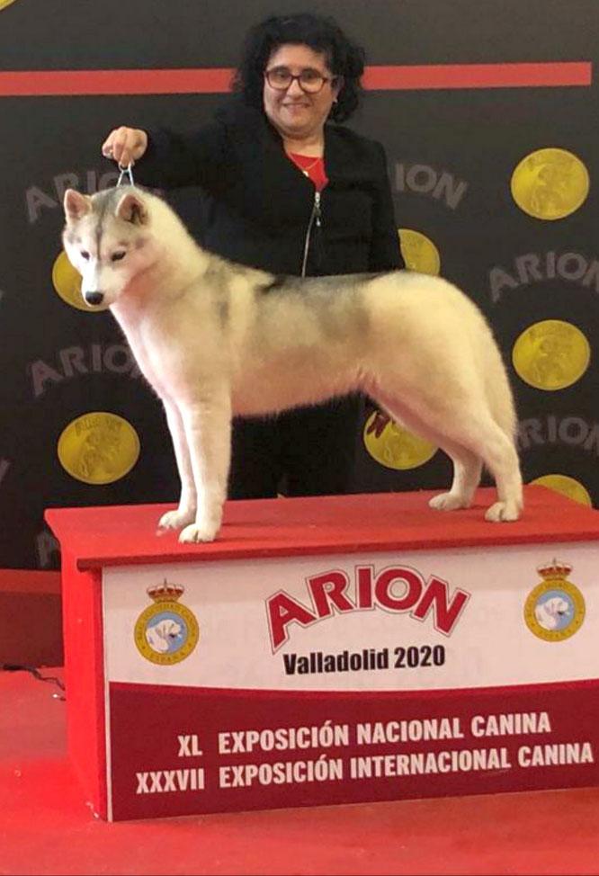 Valladolid, 23 de febrero de 2020, con el CCJ conseguido obtiene el título de CAMPEON JOVEN DE ESPAÑA