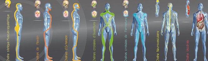 7 chaînes physiologiques