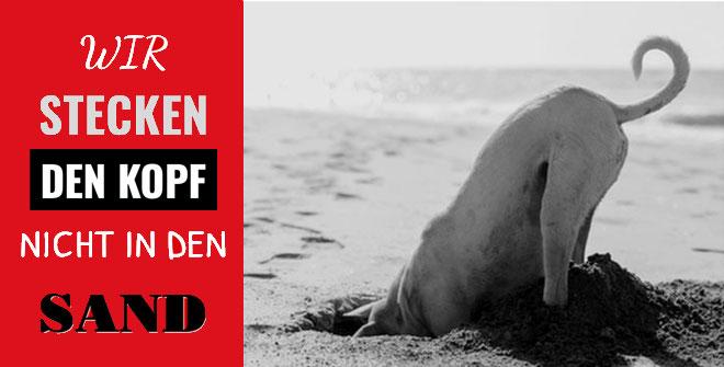 Bildbeschreibung: Hund, welcher den Kopf in den Sand steckt
