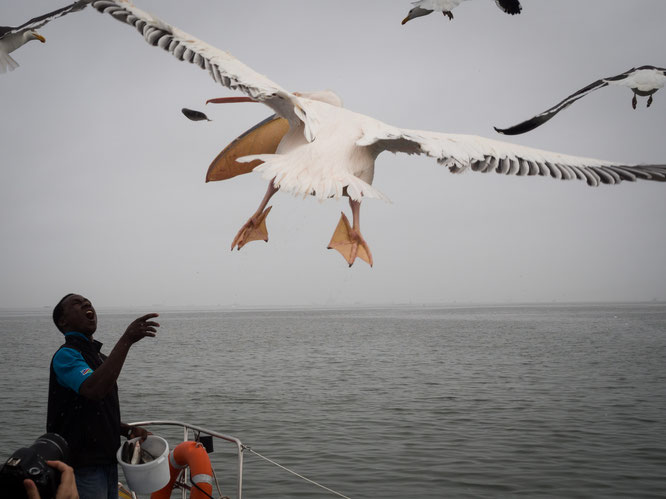catamaranfahrt | walvis bay | namibia