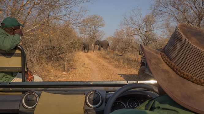 game drive | karongwe private game reserve | südafrika