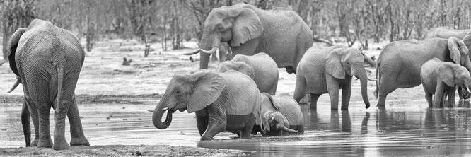 elefanten am wasserloch des hyena pan camp