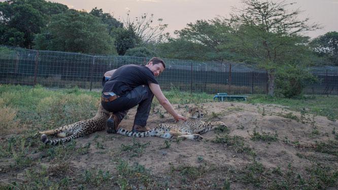 cats of emdoneni | südafrika