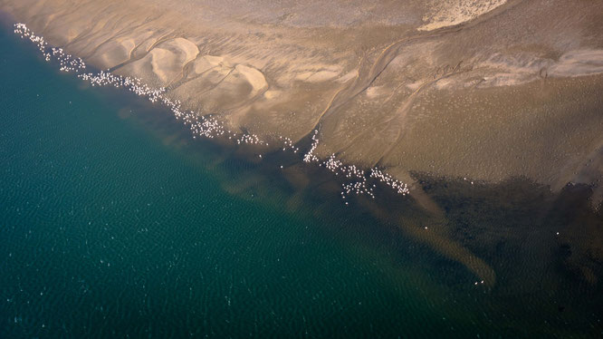 Bird`s eye view flamingos over the Walvis Bay lagune - Namib Desert Namibia