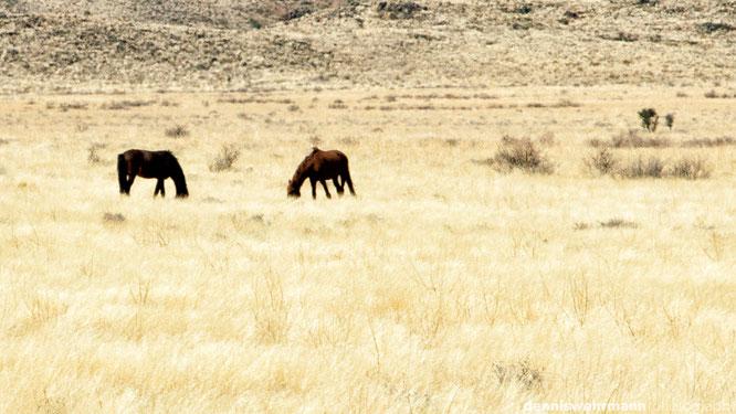 namib pferde namibia