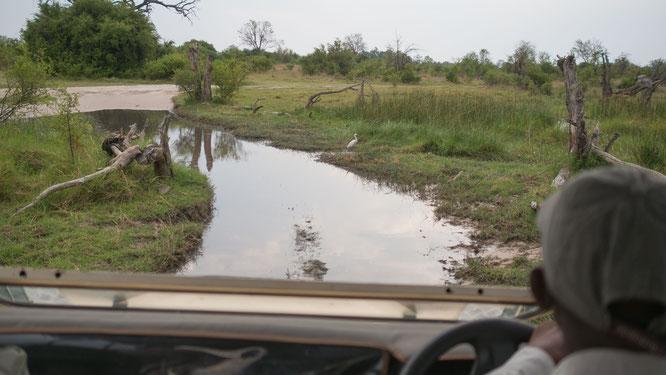 khwai konzession - moremi game reserve botswana