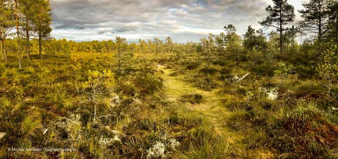 Puurijärvi and Isosuo National Park