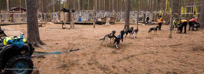 Schlittenhunde auf der Huskyfarm