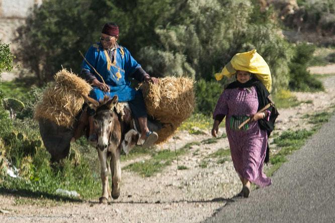 Bauern mit Esel am Straßenrand von Marokko