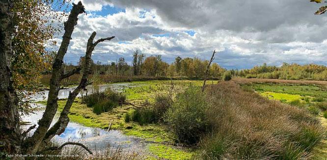 Das Hohe Moor