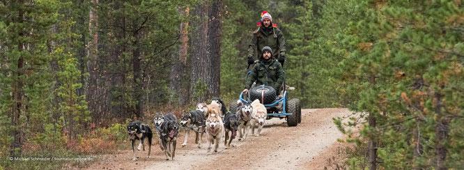 Schlittenhunde vor dem Schlitten auf der Huskyfarm Nomadic Naali