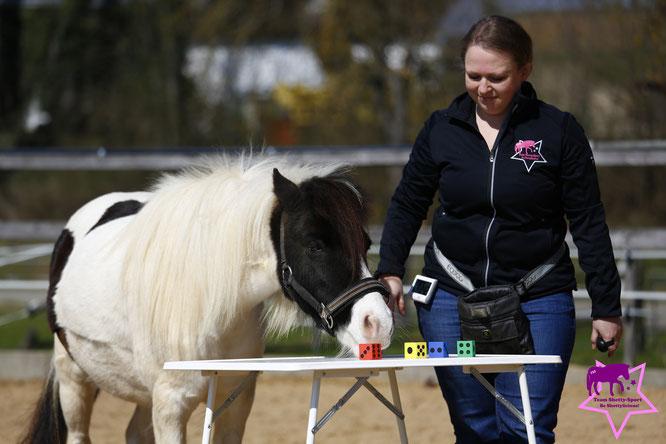 Clickern mit Pferd, Shetty, positive Verstärkung, Nasentarget, Unterscheidungsaufgabe