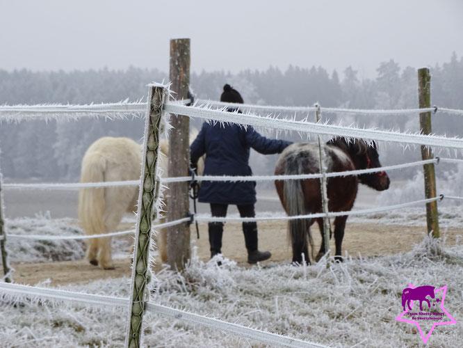 Shetty, Winterlandschaft, Beschäftigung