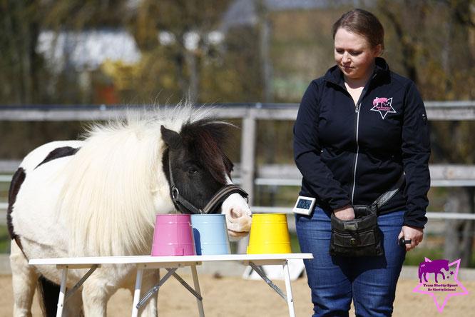Clickern mit Pferd, Shetty, positive Verstärkung, Nasentarget, Farbunterscheidung