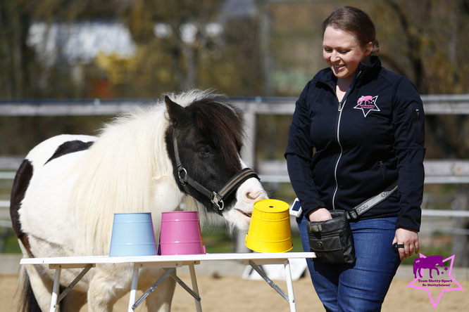 Clickertraining mit Pferd, Shetty, positive Verstärkung, Nasentarget, Farbunterscheidung