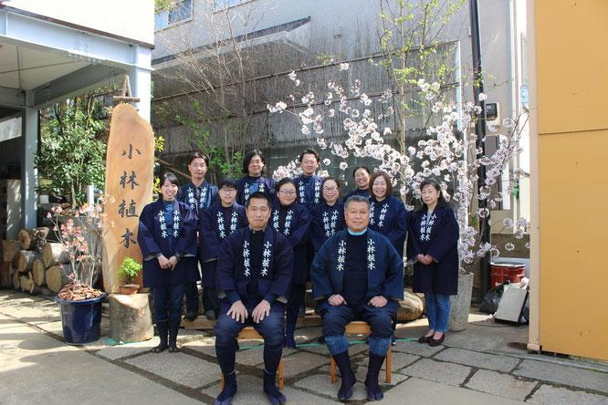 ▲川崎市高津区 有限会社小林植木  植木職人 平成30年4月
