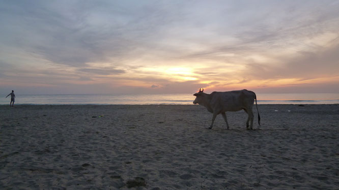 Trincomalee - Sri Lanka 2013