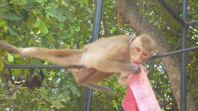 Ein kleiner Affe spielt mit Müll