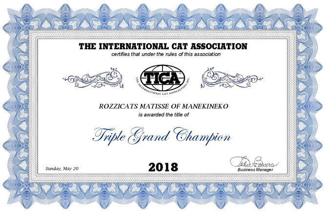 Rozzicats Matisse of Manekineko Triple Grand Champion TICA