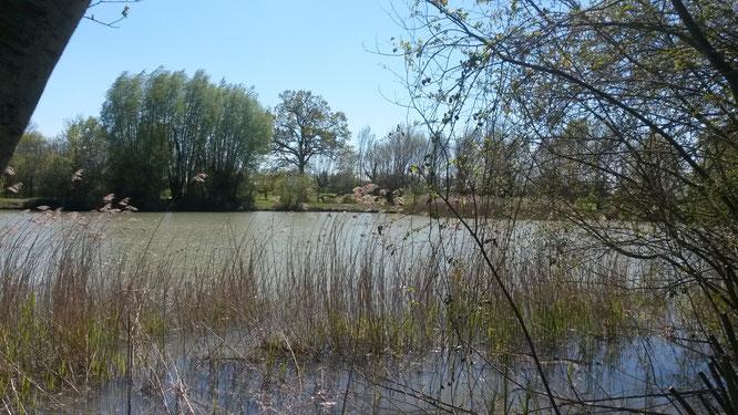 Peche (étang à 2 km)