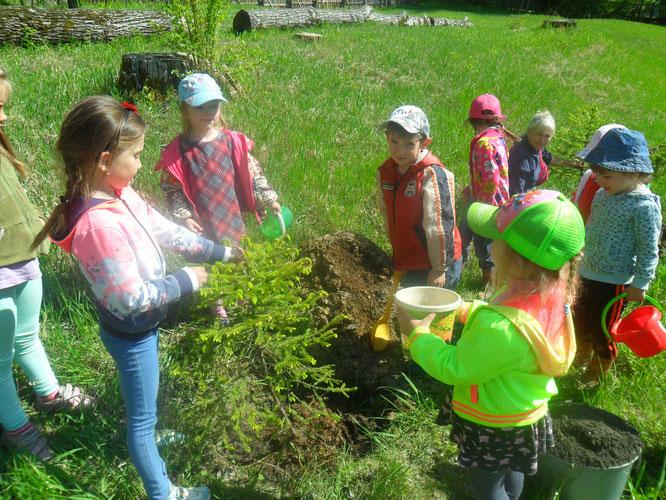 Озеленение территории детского сада!