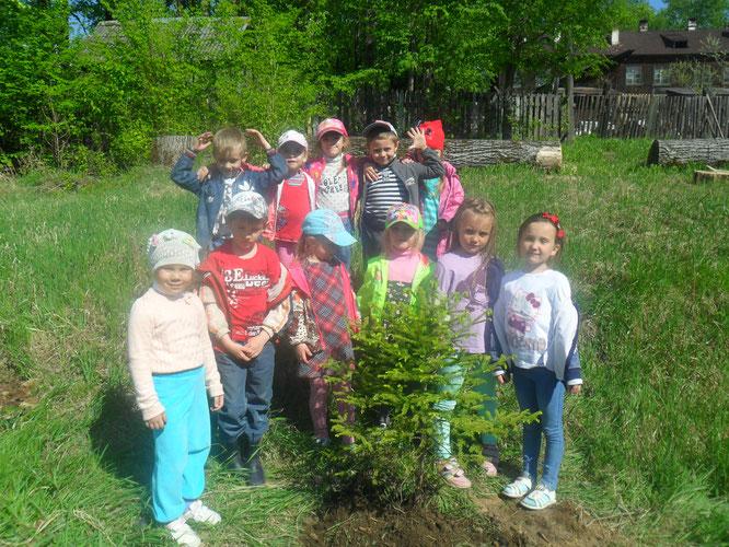 Озеленение территории детского сада! выпуск 2017 год!
