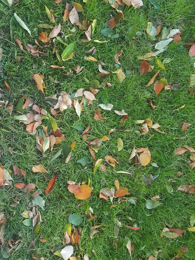 Herbstlaub auf grünem Rasen als Zeichen der Vergänglichkeit. Von Jahreszeiten und der Zeit.