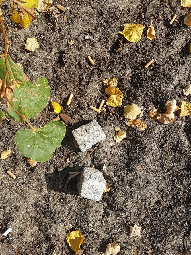 Steine und Zigarettenkippen in der Berliner Innenstadt. Metapher für erste gelungene Trennung während der Eingewöhnung.