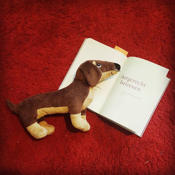"""""""artgerecht - Das andere Kleinkinderbuch"""" hilft Eltern auch bei der Eingewöhnung bzw. rund um die Betreuung von Kleinkindern mit fachlich fundiertem Wissen."""