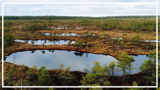Lettland. Kemeri-Nationalpark. Moor. Natur. Wanderlust.