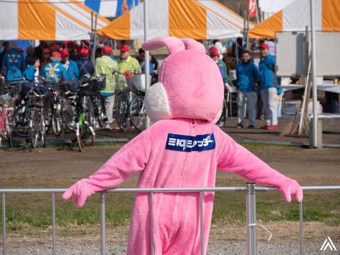 柵によりかかるウサギ