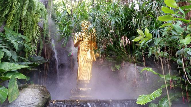 Статуя Будды в объятии сухого пара