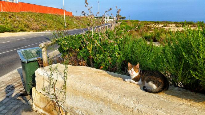 Мальта, курорт, отдых, путешествие